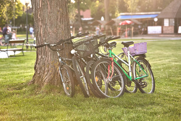 Four bikes parking leaning against the tree