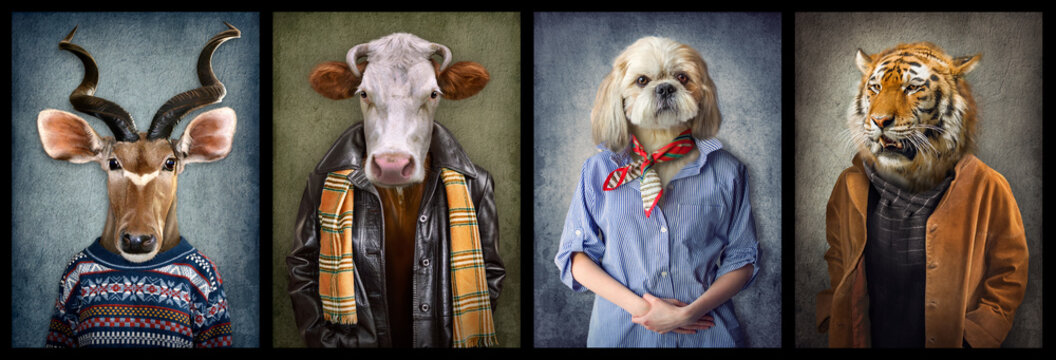 Animals in clothes. People with heads of animals. Concept graphic, photo manipulation for cover, advertising, prints on clothing and other. Antelope, cow, dog, tiger.