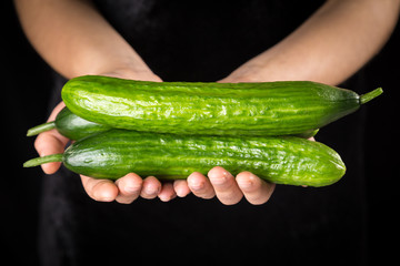 Green cucumbers in woman hands on black background