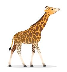 Giraffe walking flat african animal wildlife vector illustration icon isolated on white