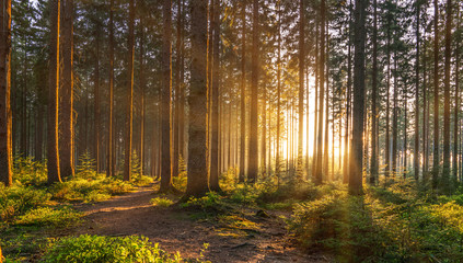 Fotorolgordijn Chocoladebruin Silent Forest in spring with beautiful bright sun rays