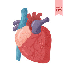 Human heart anatomy vector illustration. Organs for surgeries and transplantation. Isolated on white background, hand-drawn style.