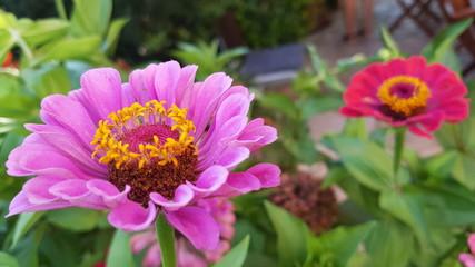 2 flores campo