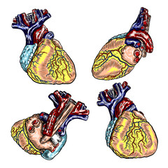Set of Human heart anatomically hand drawn. Cartoonish flash tattoo design engraving. Vector.