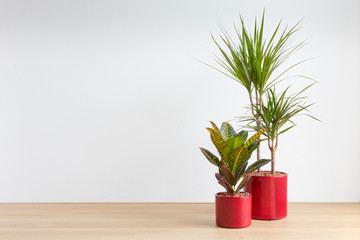 bright living room with two houseplants in red plant pots Wall mural