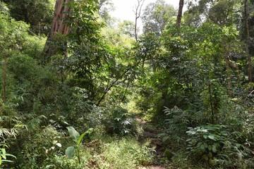 Mondokiri Provence, Cambodia Jungle Rainforest