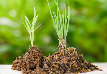 plant growing on soil / soil on wood with green young plants growing agriculture and seeding