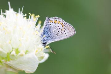 blue butterfly on a flower
