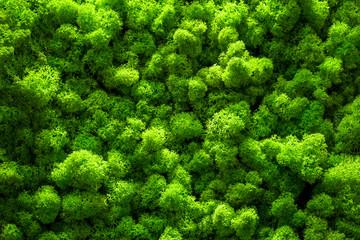 Fototapeta Green moss backgruond close up interior design. top view close up obraz