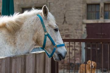 Pferdekopf ragt nach rechts hinten blickend über das Gatter
