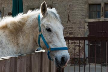 Pferdekopf ragt nach rechts vorne blickend über das Gatter
