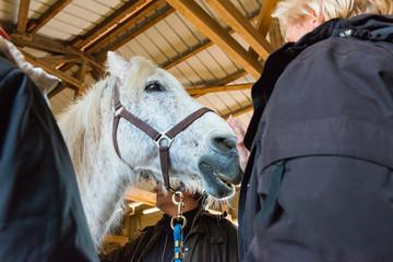 Erste Kontaktaufnahme eines Veterinärs vor Untersuchung eines Pferdes