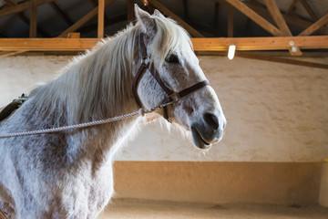 Oberkörper eines Pferdes mit Zaumzeug im Reitstall