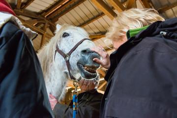 Sichtkontrolle des Gebiss eines Pferdes