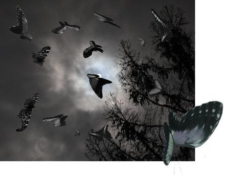 La Luna Gliders across the Moon