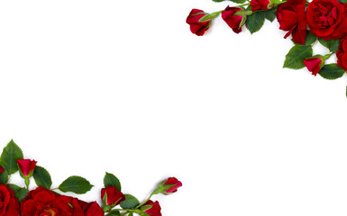 Beautiful frame of red roses and buds on white background with space for text. Top view, flat lay