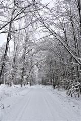 Winterlandschaft - Wald - Bäume - Schnee