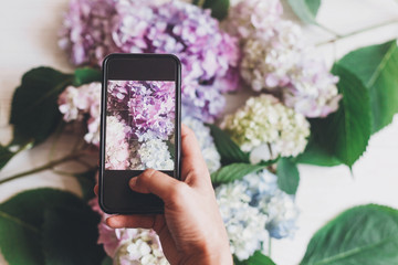 Hand holding phone and taking photo of hydrangea flowers on rustic white wood, flat lay. Content for social media concept, blogging photos. Happy mothers day. Space for text