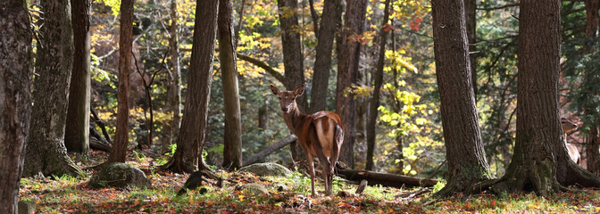 red deer in forest during autumn