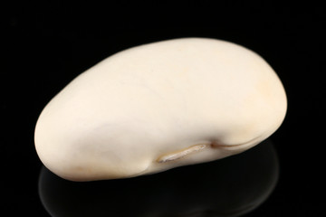 One white bean on a dark background
