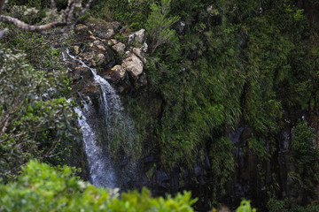 In the forest among the trees pours a waterfall