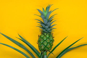 Small and young green growing pineapple on yellow matt background