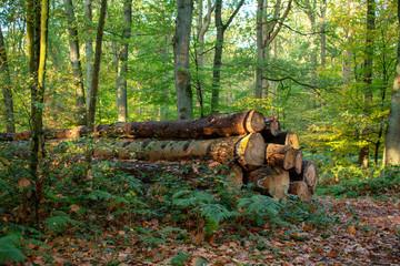 Stapel abgeholzter Baumstämme. Standort: Deutschland, Nordrhein-Westfalen, Hoxfeld