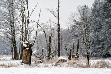 Piękna zima na Podlasiu, Polska