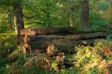 Holzstapel aus Baumstämme. Standort: Deutschland, Nordrhein-Westfalen, Hoxfeld