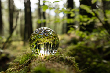 Crystal Ball in the Forest