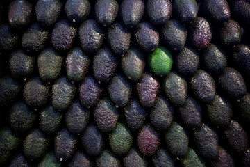 """Avocados are on display for sale at the wholesale market """"Central de Abastos"""" in Mexico City"""