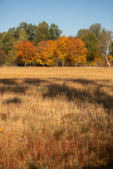 View from the field to the forest in autumn colors