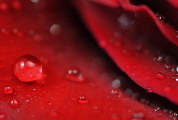 closeup drops on flower petals