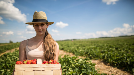 Young woman in straw hat picking strawberries on the field. Beautiful sunny day, great for relaxation in nature.