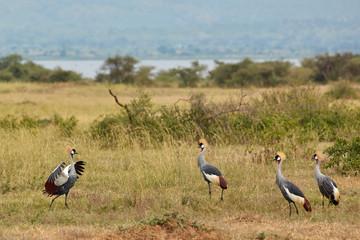 Murchison Falls Wildlife