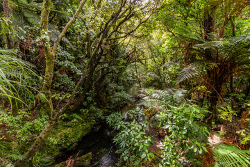 Waipoua Forest, New Zealand