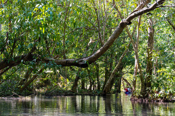 travel mangrove forest by rowboat