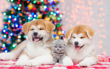 Akita inu puppies with tiny kitten with  Christmas tree on a background
