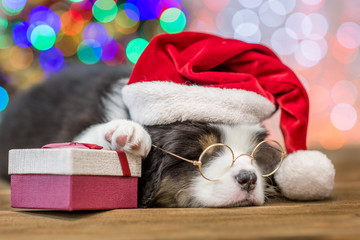 Australian shepherd puppy with red santa hat and gift box sleep with Christmas tree on background