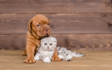 Puppy hugging kitten on wooden background. Empty space for text