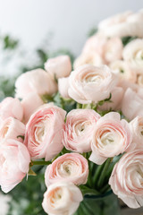 Persian buttercup in glass vases. Bunch pale pink ranunculus flowers light background. Wallpaper. Winter season flowers