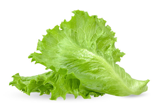 Lettuce isolated on white with clipping path