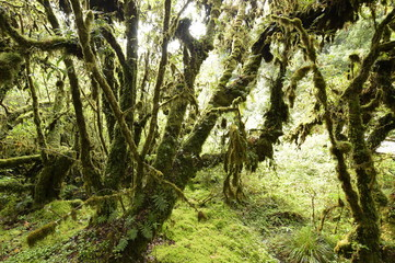 tree trunks and the ground covered with green moss in forest