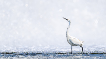 White egret portrait with a white waterfall background