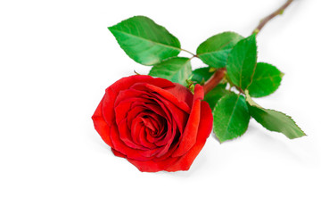 A bunch of red petals of Rose and green leaves isolated on white background, di cut with clipping path