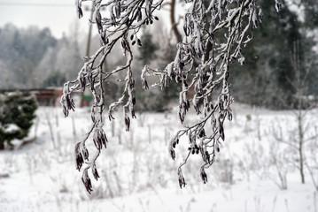 Zimowy krajobraz Podlasia, Polska