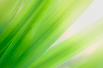 Close up natural green leaf and greenery blurred background in public garden in morning time with sunlight which it use for plant background texture. Ecology landscape can copy space concept.