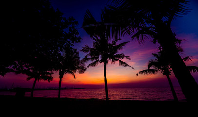 Beautiful tropical beach with palm trees. Sunrises and sunsets. Ocean.