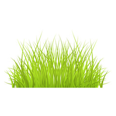 Vector green grass border for summer landscape design. Natural decoration element for parks, gardens or rural fields scenery. Lawn or plants object. Isolated illustration