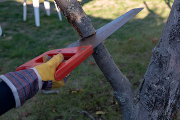a child saws a branch in the garden with a garden saw